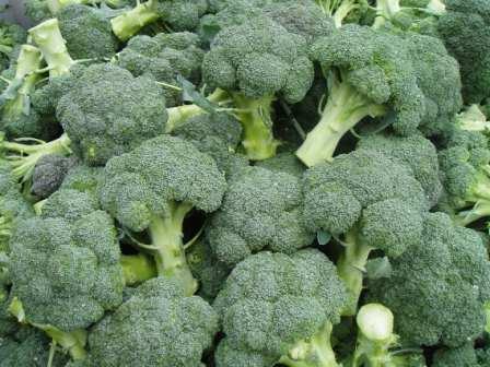 Читайте обо всех тонкостях, которые необходимо соблюдать, чтобы на ваших грядках развивалась крепкая капуста брокколи. Когда собирать урожай и как хранить овощ после срезки — еще одна важная тема, которую мы рассмотрим.
