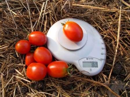 Хозяйки, планирующие создание качественных заготовок из помидоров, в первую очередь заинтересованы в красивой форме плодов, высокой мясистости, плотной кожице и удобных размерах.