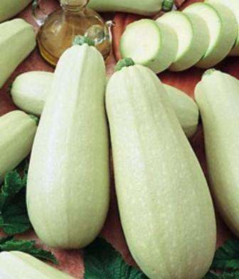 Сорт ультраскороспелый (уже через 35-40 дней можно собирать первый урожай), устойчивый к болезням.