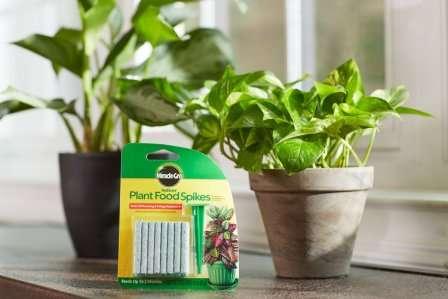 Подкормки для комнатных растений зимой как помочь а не навредить