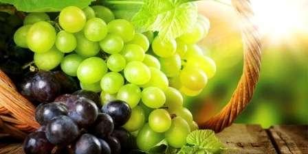 сорта винограда с фото и описанием по алфавиту