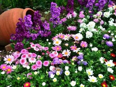 Почему многие садоводы предпочитают устраивать разнообразные клумбы именно из растений, не теряющих декоративность все три жарких месяца?