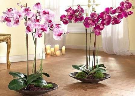 Сегодня на сайте для фермеров мы расскажем, как ухаживать за орхидеями в домашних условиях в горшке для начинающих.