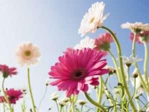 Какие цветы посадить на даче, чтобы цвели все лето - фото