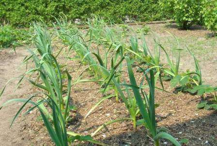 Минеральные — произведенные химическим путем жидкие или сыпучие вещества, содержащие отдельные элементы питания для растений или целый комплекс.