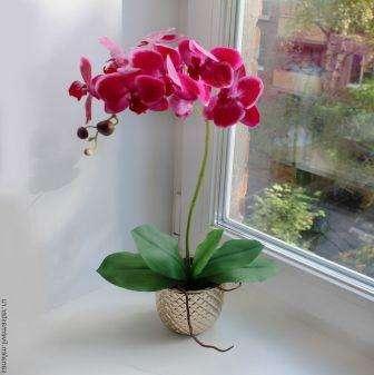 Чтобы создать хорошее освещение для орхидеи, а именно рассеянный свет, следует поставить горшок на восточное или западное окно или найти такое место в домашних условиях, где растение будет находиться часть дня под непрямыми солнечными лучами.