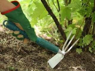 На борьбу с разного рода микроорганизмами, грибами и насекомыми направлены все перечисленные шаги весеннего ухода.