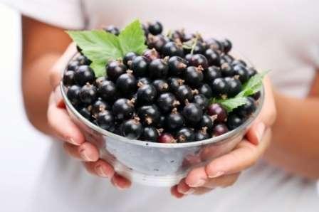 Правильный выбор препаратов и соблюдение всех рекомендаций относительно проведения мероприятия помогут спасти кусты и получить полноценный урожай полезных ягод.