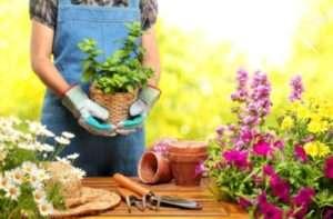 Если следование точным датам посадки цветов не ваш вариант, придерживайтесь одного простого правила садоводов — не начинайте выращивать рассаду в день полнолуния и новолуния.