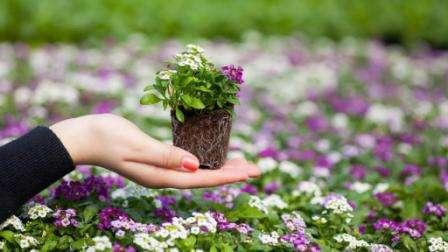 Как сажать цветы полнолуние 678