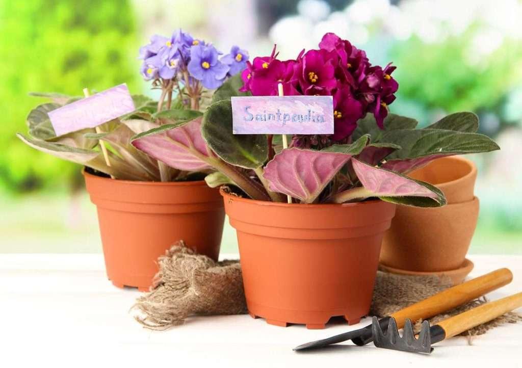 Почва для этого комнатного цветка должна быть кислой.