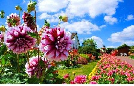 Как сажать цветы полнолуние 62