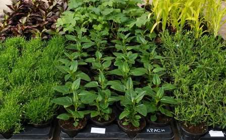Для выращивания качественной рассады цветов не подойдет обычная огородная земля.