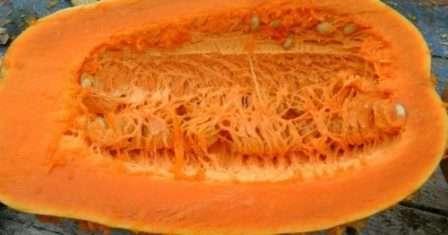 Стоит также отметить, что тыква сорта «Витаминная» неплохо переносит хранение и транспортировку, дает хороший урожай.