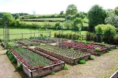 Чтобы прополка, полив и сбор урожая осуществлялся легко и быстро, необходимо заранее определить размеры отдельных овощных насаждений и величину проходов.