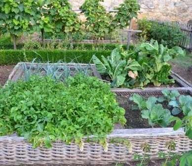 Одним из важных нюансов является правильное создание уровней культур на огороде. С северной стороны участка правильно сажать высокие растения, с южной — низкие.