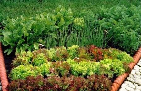 Делая совмещенные посадки на грядках, важно учитывать рост каждой культуры. Следите, чтобы не получилась ситуация, в которой одно растение будет затенять другое.