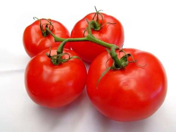 томат катя описание