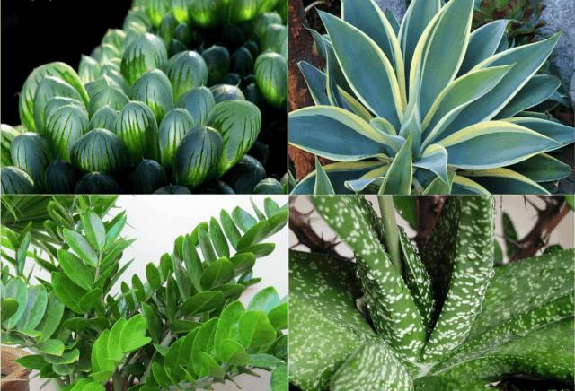 Комнатные растения в домашних условиях