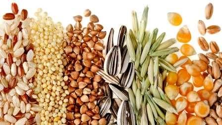 Производство масличных культур