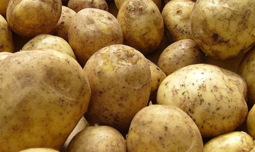сорта картофеля для хранения на зиму как выбрать