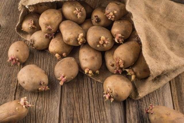 Производство картофеля и клубневых