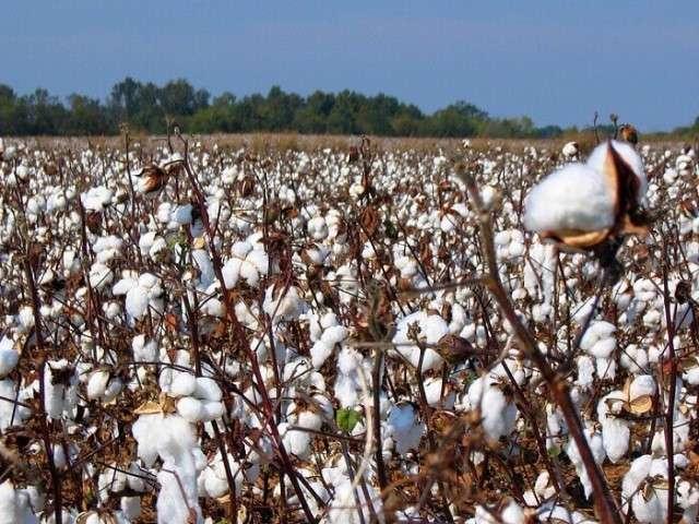 Непродовольственное растениеводство