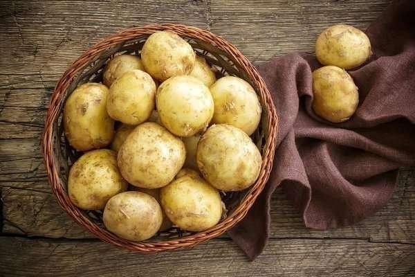 фото сорта картофеля голубизна