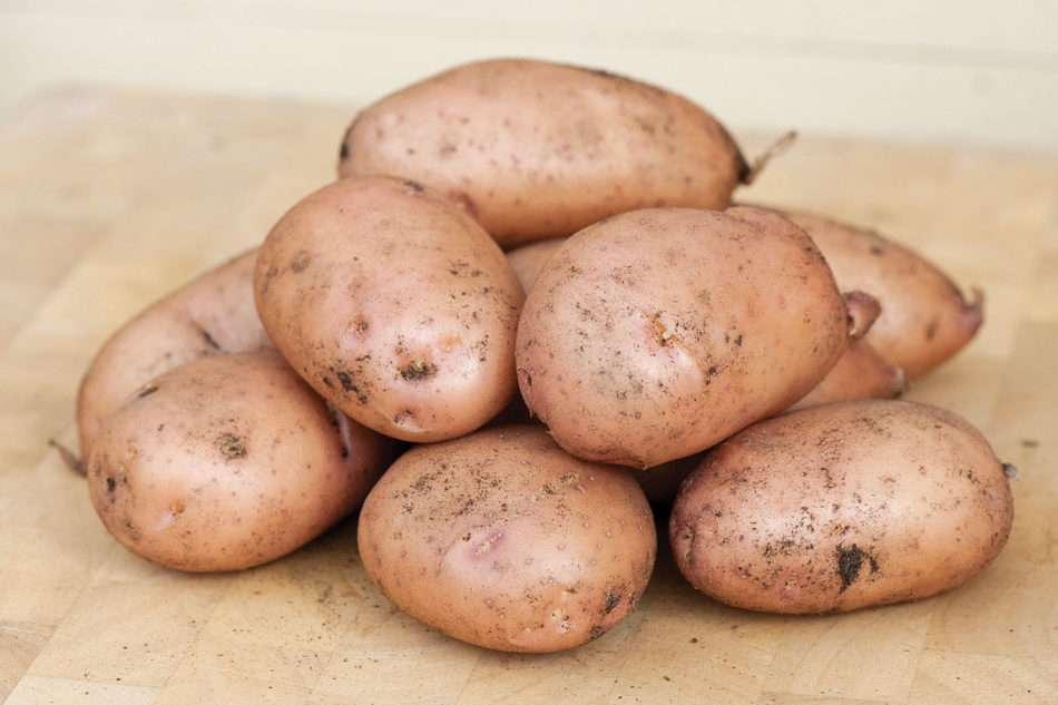 жуковский ранний картофель характеристика
