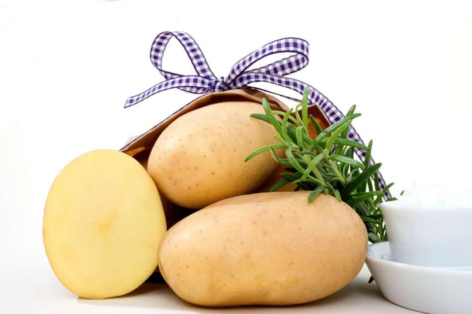 картофель джелли описание сорта фото отзывы