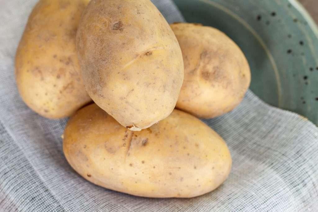 картофель синий великан описание сорта фото отзывы