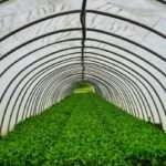 Что представляет собой посадка под агроволокно