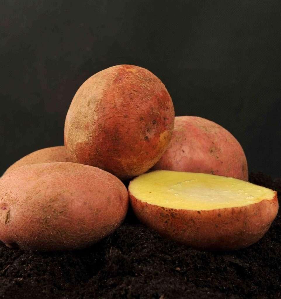 Как получить урожай от сорта картофеля Журавинка