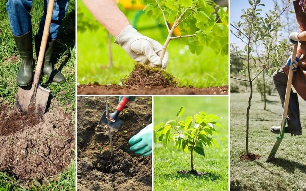 как правильно посадить саженец весной