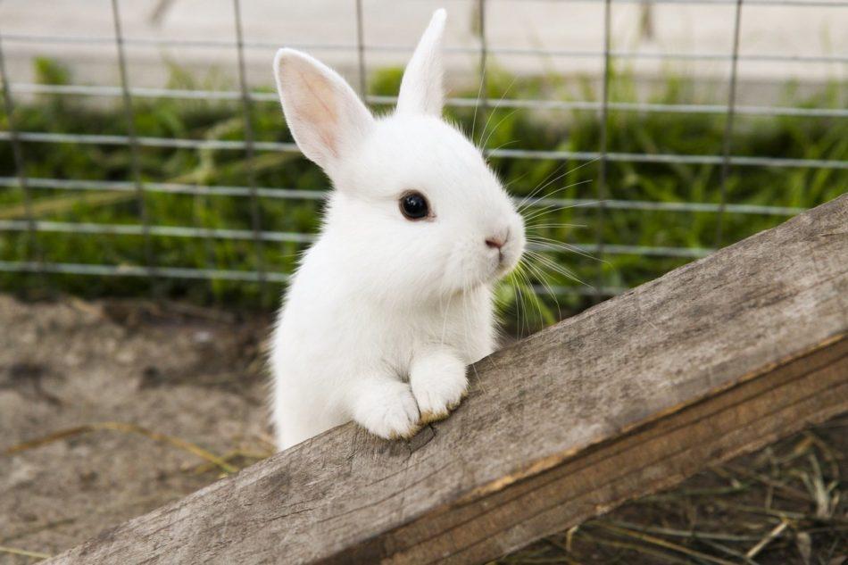Понос у кроликов - причины и лечение