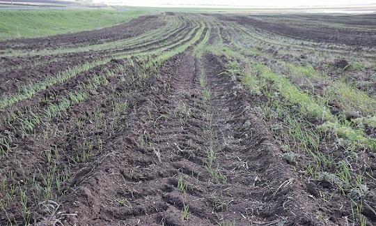 Переуплотнение почв при сельхозработах: причины, последствия и способы устранения