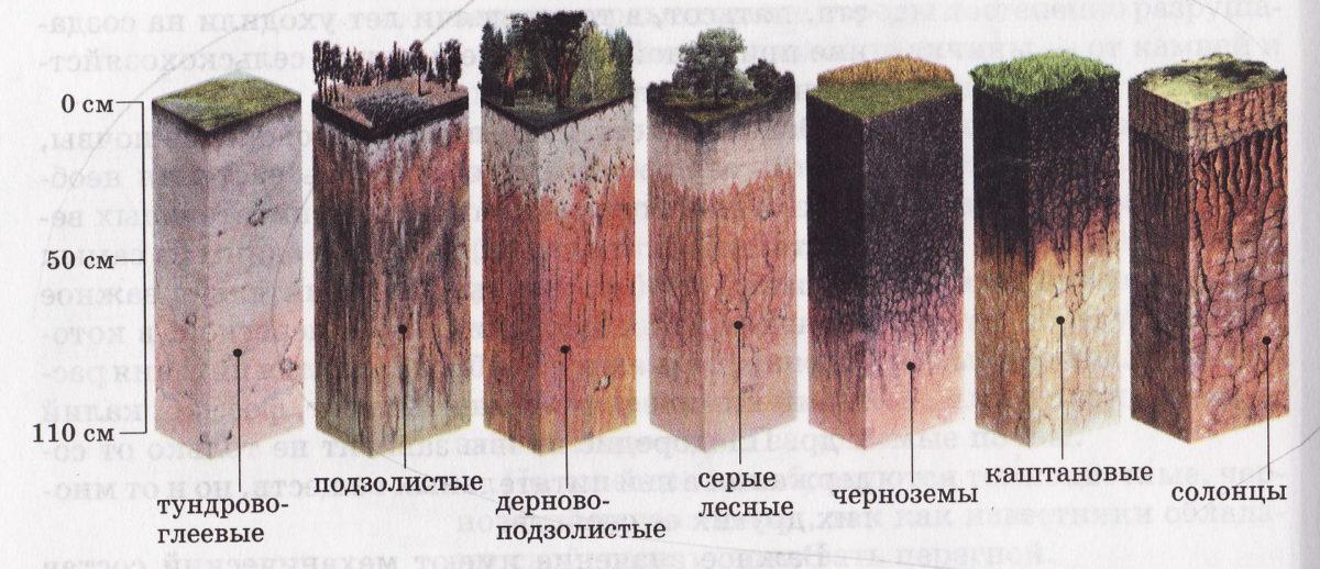 подкормка огурцов в августе в открытом грунте