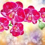 Зола для комнатных растений: применение сухого вещества и раствора. Полезные советы