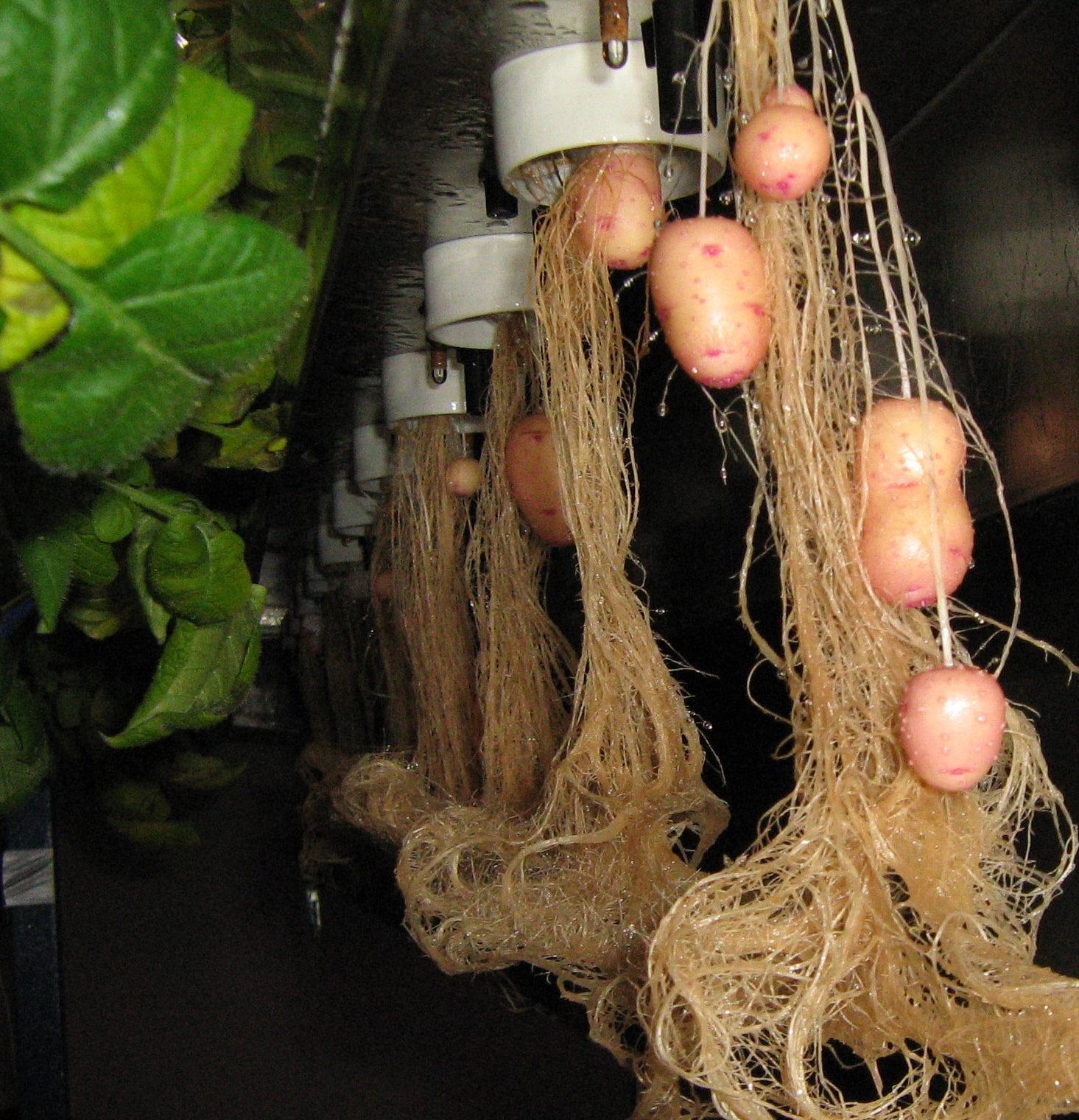 Раствор для гидропоники: виды, как готовить, сколько нужно растениям