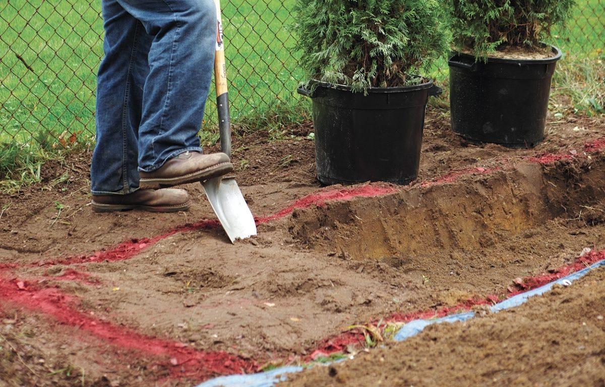 Когда лучше сажать тую – весной или осенью, как ухаживать за хвойными растениями в саду