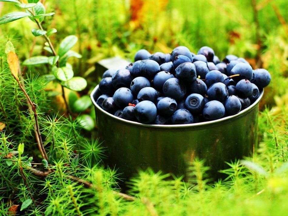 Чем подкормить голубику садовую осенью, чтобы увеличить урожай
