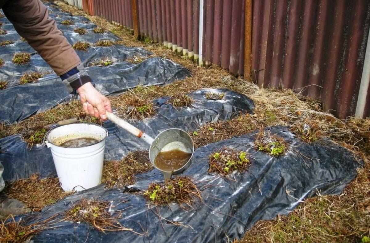 Конский навоз как удобрение: как применять, отзывы опытных садоводов