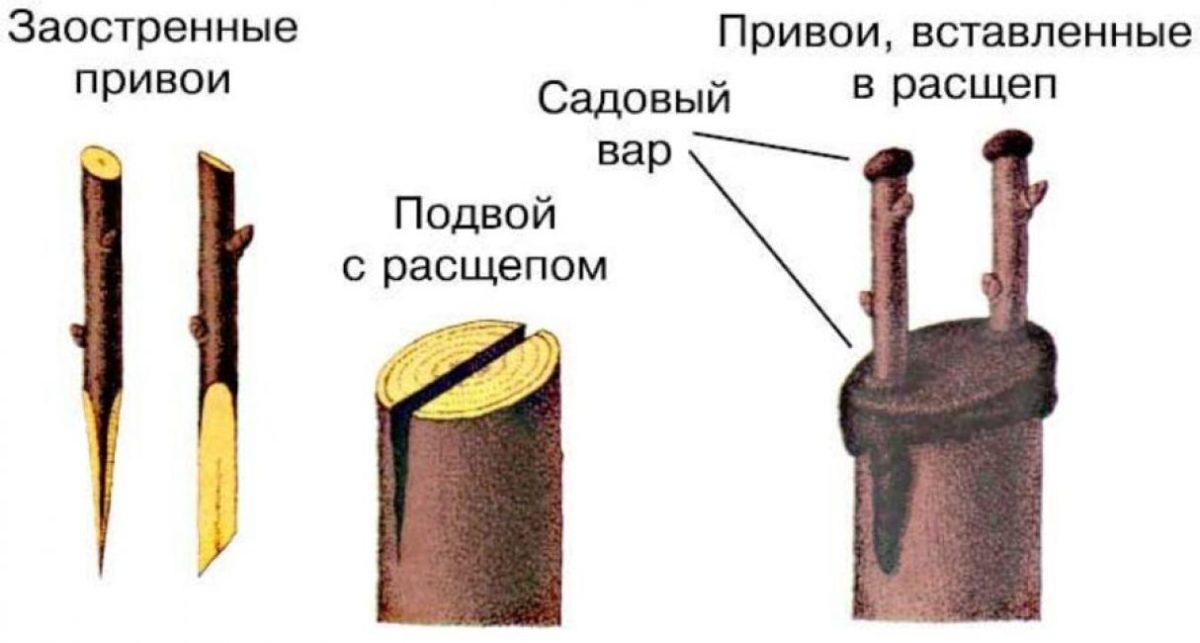 Как посадить гранат