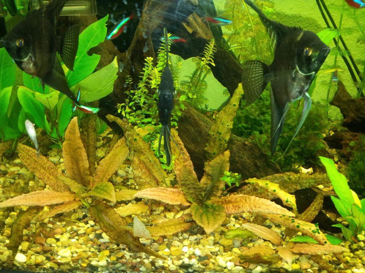 жидкие удобрения для аквариумных растений