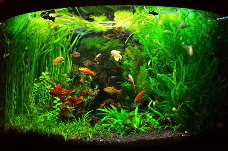 Удобрения для аквариумных растений своими руками – виды и особенности использования
