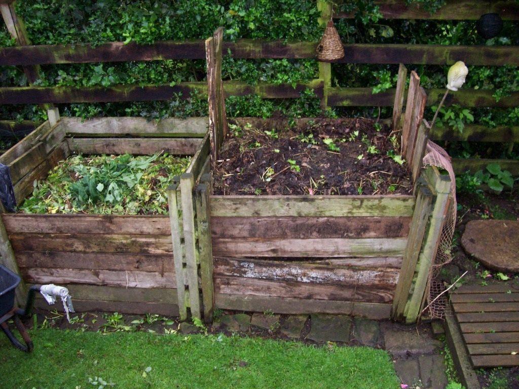 Ботва гороха как удобрение – как правильно выращивать, когда собирать