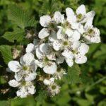 Обработка малины осенью на зиму: обрезка, мульчирование, полив, подкормки