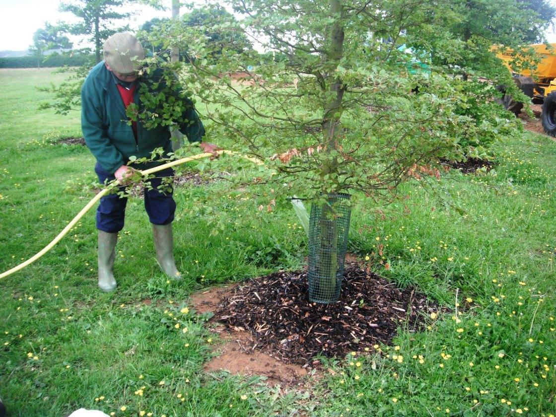 подкормка сливы осенью удобрениями