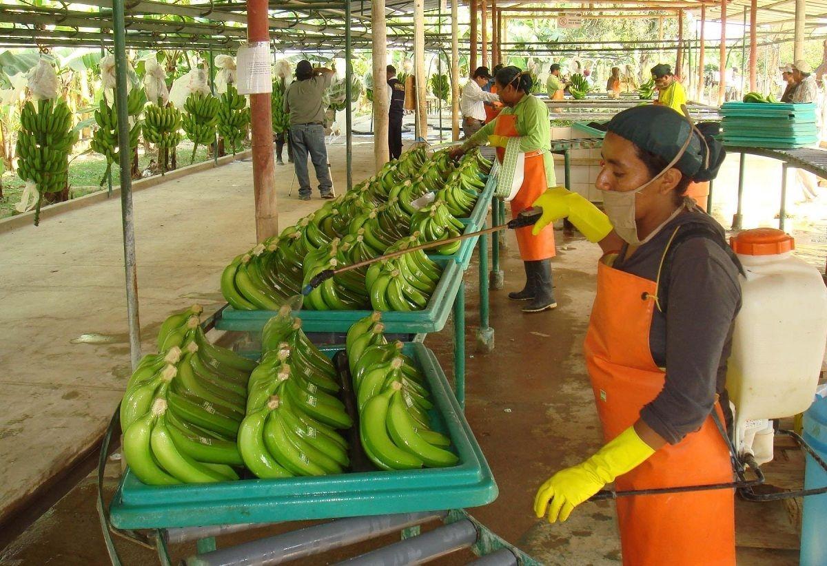 удобрение из банановой кожуры для комнатных растений