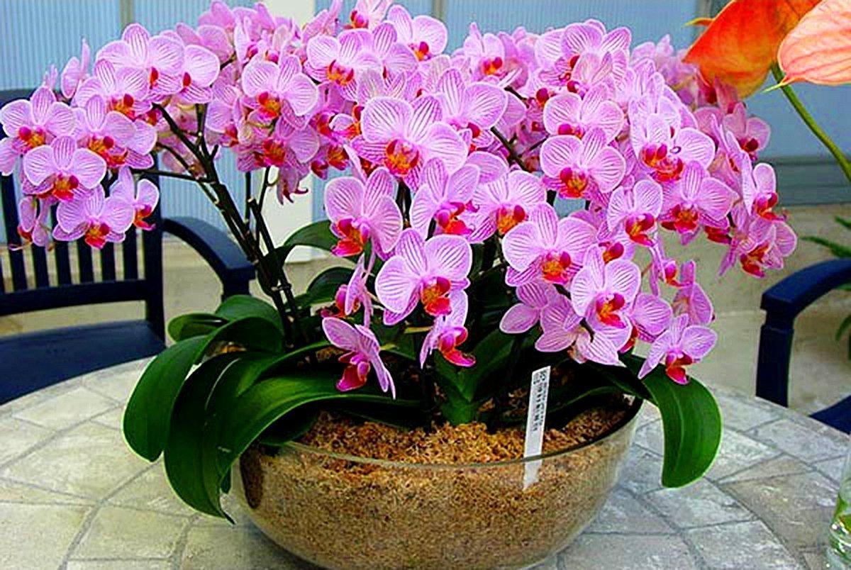 удобрение для орхидей
